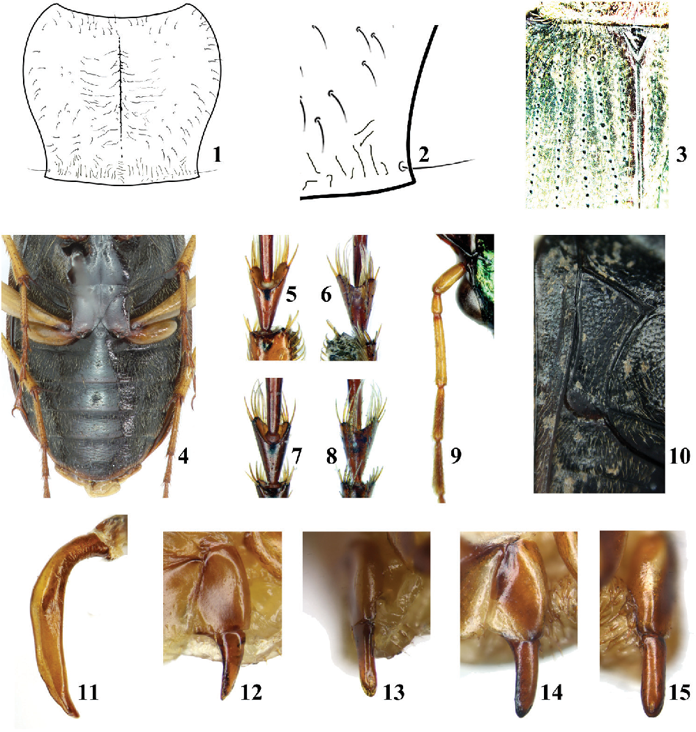 figure 1–15