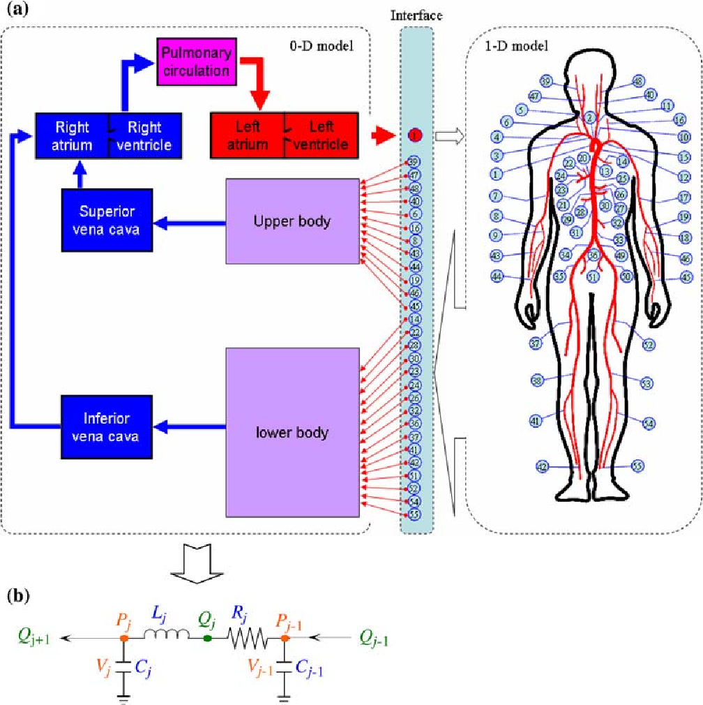 Multi Scale Modeling Of The Human Cardiovascular System With