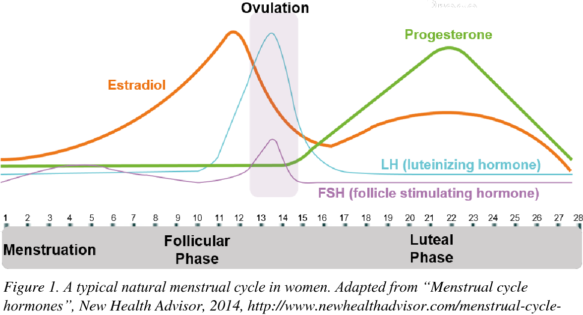 sex Menstrual cycle and oral