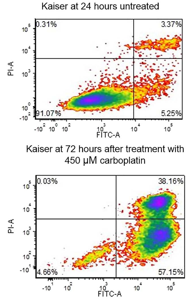 FIGURE 2 Representative Annexin V FITC-A versus Propidium Iodide-A contour plots from untreated cells and cells treated with 450 lM carboplatin