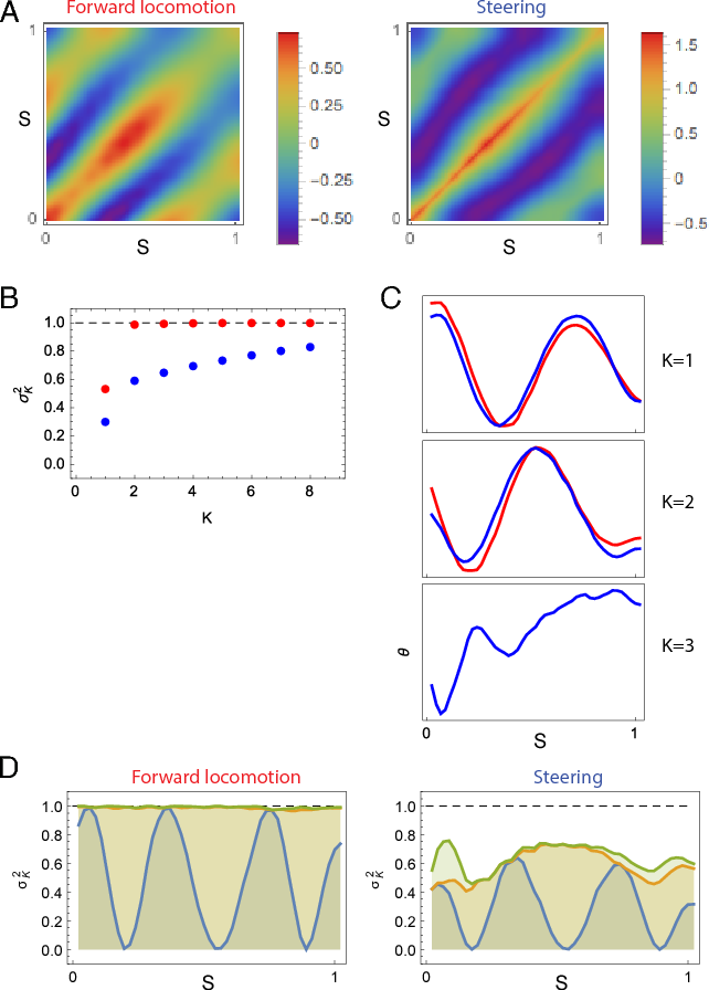 Figure 8: Shape statistics: Eigenworms for forward locomotion and steering. Position along the body is represented by s, normalized so that s = 0 is the head and s = 1 is the tail. (A) The covariance matrix of fluctuations in angle. (B) Fraction of the total variance (integrated along the body of the worm) captured by keeping K eigenvectors (K = 1 to 8), calculated from the Eigenvalues of the covariance matrices for the forward locomotion model (red) and the integrated model with the steering circuit (blue). (C) Associated with each dominant mode is an eigenvector or eigenworm. First three eigenworms shown for the forward locomotion model (red) and the integrated model with the steering circuit (blue). (D) Fraction of the variance (unrolled over the body of the worm) captured by keeping K eigenvectors (K = 1 to 3, from bottom to top) for the forward locomotion model and the integrated model with the steering circuit.