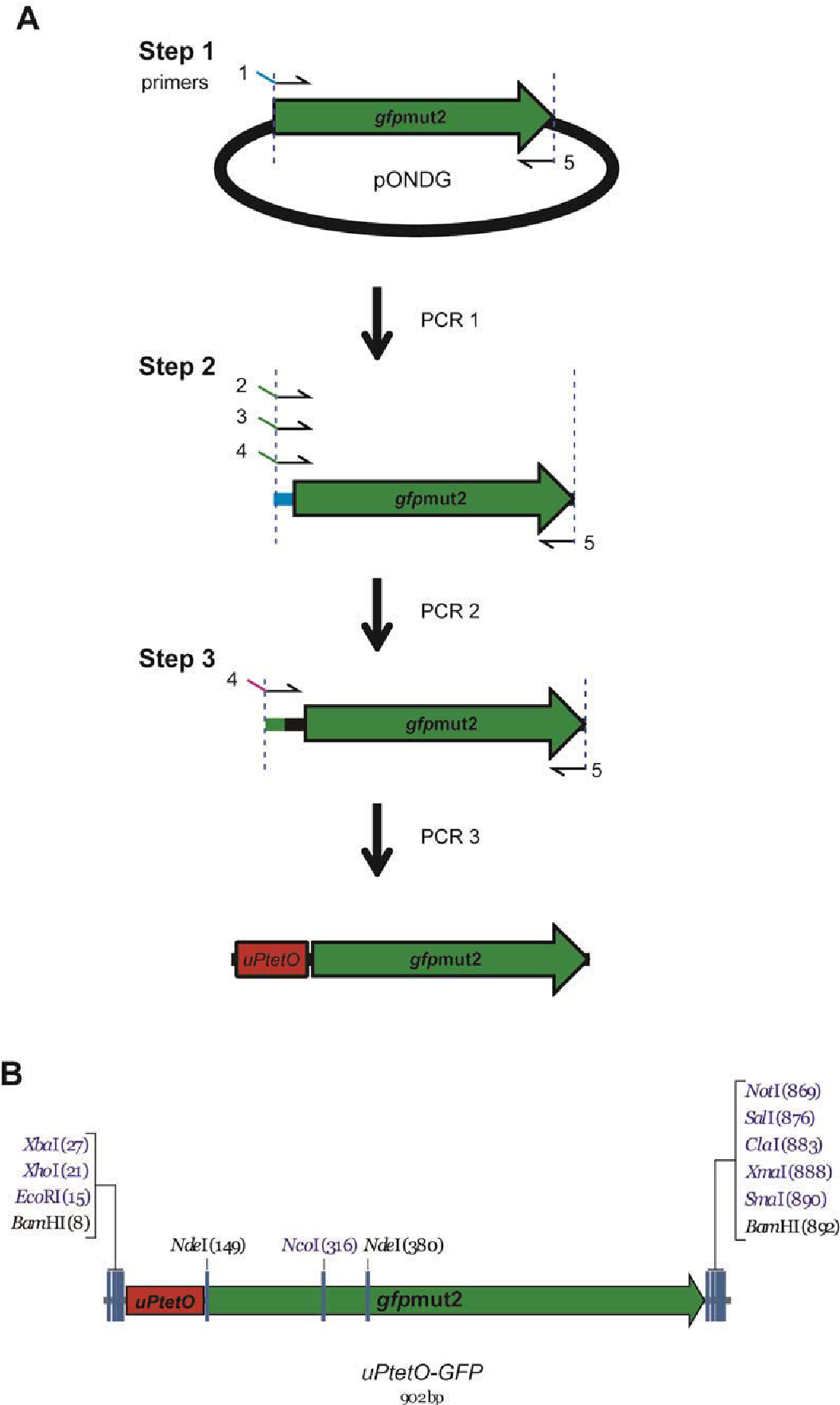 Figure 3-14 Construction of tet-responsive promoter-GFP fusion constructs, uPtetO-GFP