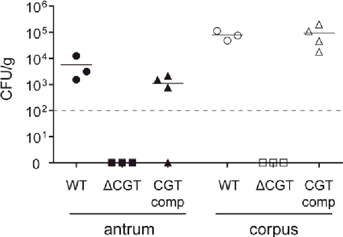 Figure 5-9 Colonization of uPtetO-CGT complemented X47 cgt mutants in Mongolian gerbils Three groups of Mongolian gerbils were infected with wild-type X47 (WT), a pool of second generation cgt mutants (ΔCGT) or a pool of 6 different strains (CGT comp) that expressed cgt from a foreign locus under the control of the uPtetO promoter. Colonization was evaluated two weeks after oral challenge. The bacterial load in gerbils infected with CGT comp strains was similar to that of gerbils infected with wild-type X47 strain, in both the antrum and the corpus. H. pylori colonies could not be reisolated from gerbils challenged with X47 cgt mutants. Horizontal bars represent mean bacterial load per group (n = 3 or 4) and points plotted represent colonization density for each individual animal. Detection limit was < 100 CFU/g of stomach tissue (dotted horizontal line). Gastric specimens without H. pylori re-isolation are shown as null.