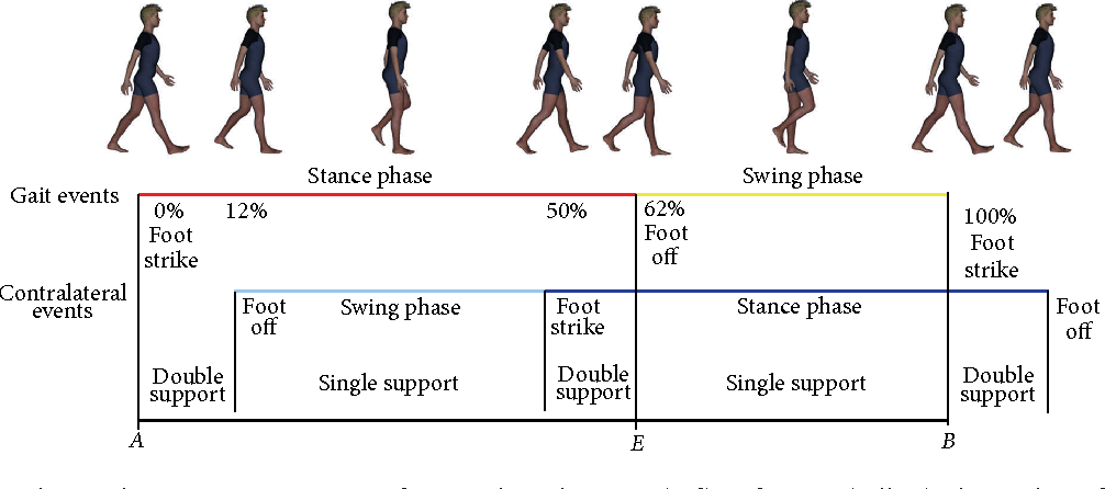 Figure 1 from The Golden Ratio of Gait Harmony: Repetitive