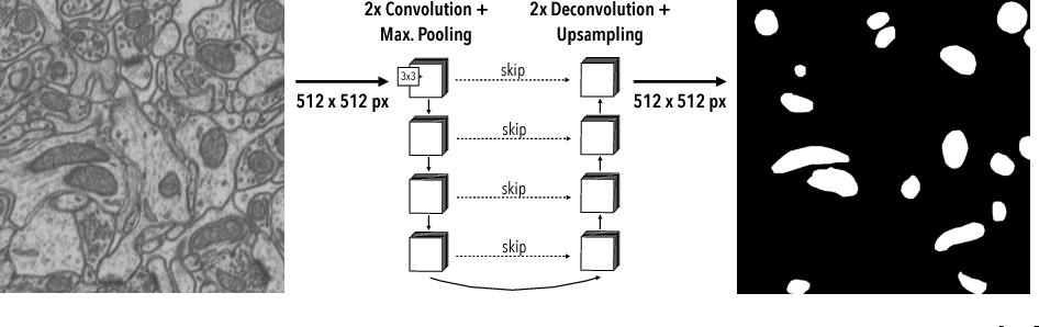 Figure 3 for Fast Mitochondria Segmentation for Connectomics