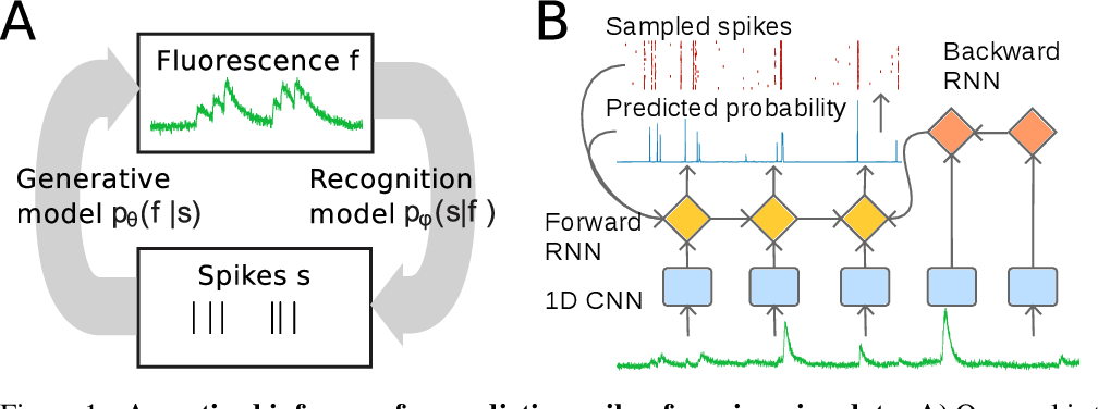 Figure 1 for Fast amortized inference of neural activity from calcium imaging data with variational autoencoders