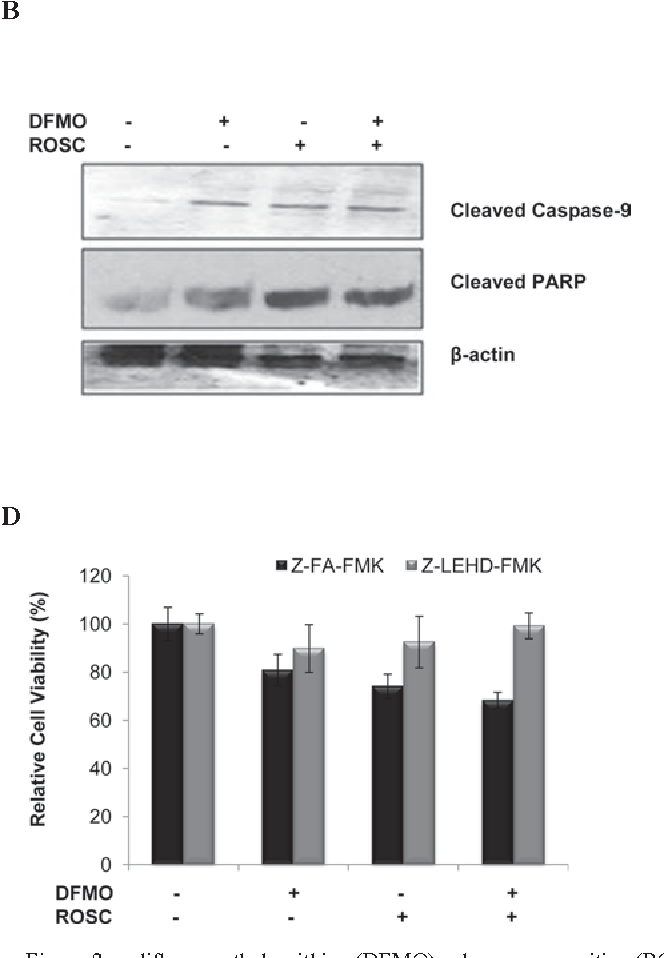 Figure 2. α-difluoromethylornithine (DFMO) enhances roscovitine (ROSC)induced caspase-dependent apoptosis by decreasing mitochondrial membrane potential (Δψm) in MCF-7 cells. (A) MCF-7 cells were treated with DFMO (2.5 mM) and ROSC (20 µM) or the combination of both for 24 h. Apoptotic induction was determined using the Cell Death ELISA Plus kit. Columns represent the means ± SD of at least 2 experiments with 2 replicates. Statistical difference was analyzed using an unpaired t-test; *p=0.0126; ***p=0.002. (B) The disruption of Δψm was measured using a fluorometer following 3,3'-dihexyloxacarbocyanine iodide [DiOC6(3)]staining in MCF-7 cells (excitation = 485 nm, emission = 538 nm). Columns represent the means ± SD of 5 replicates from at least 2 different culture conditions. (C) Activation of caspase-9 and cleaved fragments of PARP shown by immunoblotting. Total protein (20 µg) was loaded into each well. β-actin was used as the loading control. (D) After treatment of cells for 2 h with caspase-9 inhibitor (Z-LEHD-FMK; 20 µM), MCF-7 cells were treated with ROSC + DFMO for 24 h. MTT cell viability assay was used to evaluate the caspase-dependent apoptotic induction. The results were compared to negative caspase inhibitor (Z-FA-FMK; 20 µM)-treated MCF-7 cells. (E) Cells (3x106) were seeded into 100-mm Petri dishes and treated with ROSC and/or DFMO for 24 h. Caspase-6 activity was measured using the ApoTarget assay. Columns represent the means ± SD from at least 2 experiments with 5 replicates. Statistical difference was analyzed using an unpaired t-test; *p=0.0141.