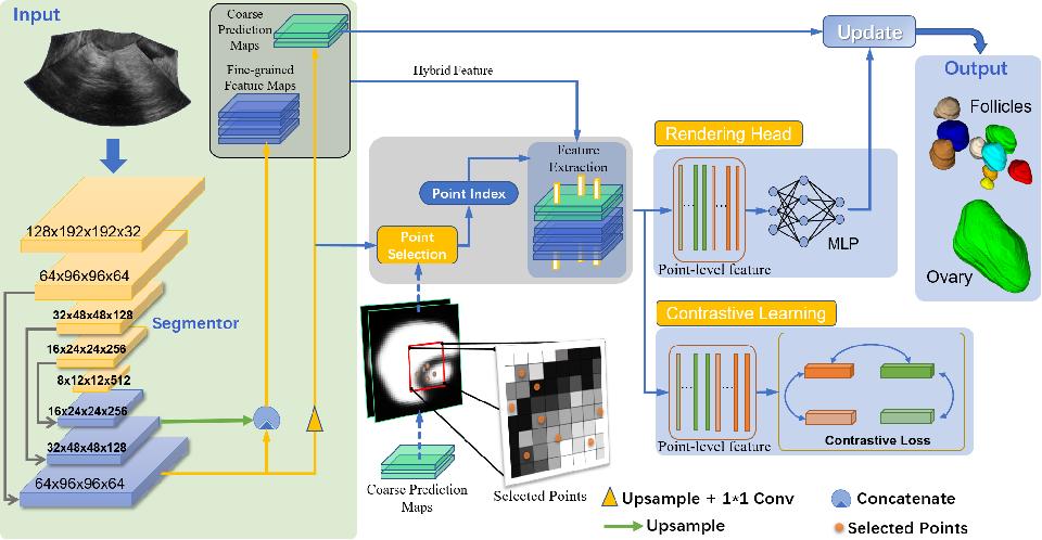 Figure 3 for Contrastive Rendering for Ultrasound Image Segmentation