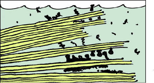 Figure 1. The mica hypothesis for the origins of life. A sketch of mica sheets under water, with 'molecules' of various sizes and conformations between the sheets. Mica sheets are 1-nm thick. The sketch shows the mica separated into layers as thin as 3-4 sheets (3-4 nm), but it is more realistic to propose that the thinnest layers are hundreds of sheets thick, to have larger spring constants and more robust compartments.
