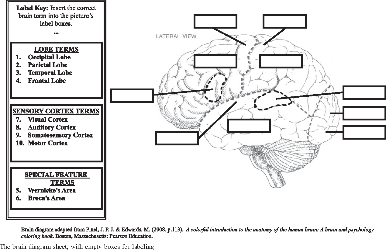 Mindmap : a spatial activity for learning physiology terminology and ...