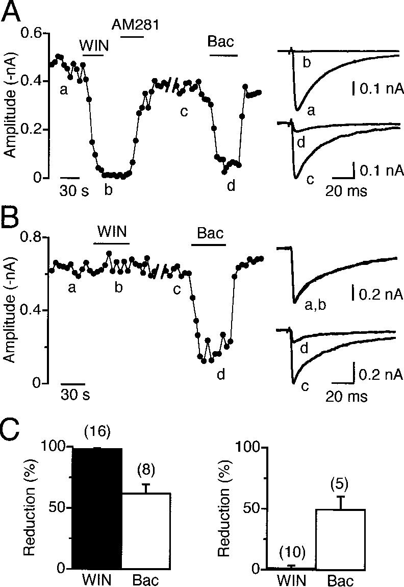 Figure 1. Heterogeneity of the Effects of WIN55,212-2 on IPSCs