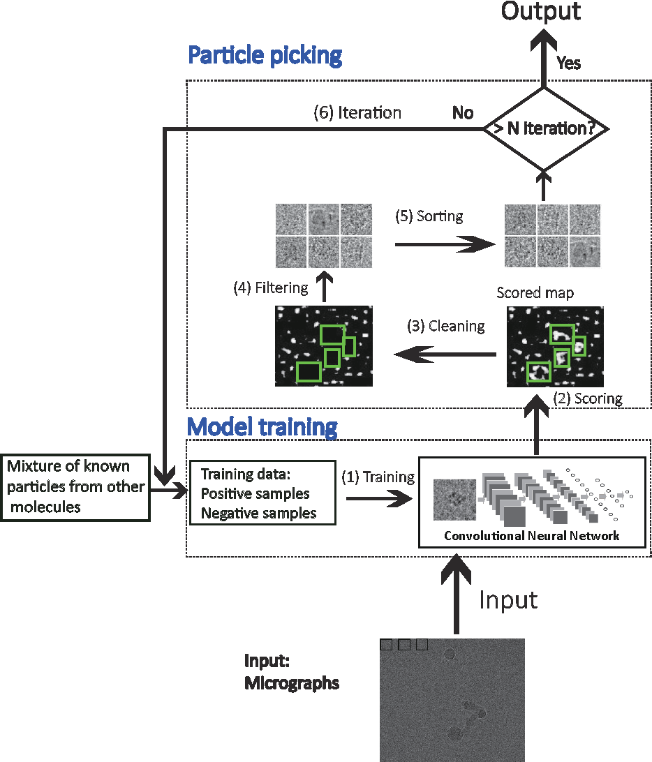 Figure 1 for DeepPicker: a Deep Learning Approach for Fully Automated Particle Picking in Cryo-EM
