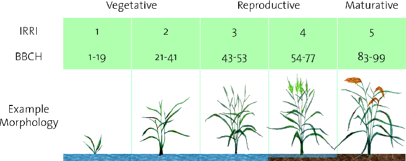 PDF] Determining Rice Growth Stage with X-Band SAR: A