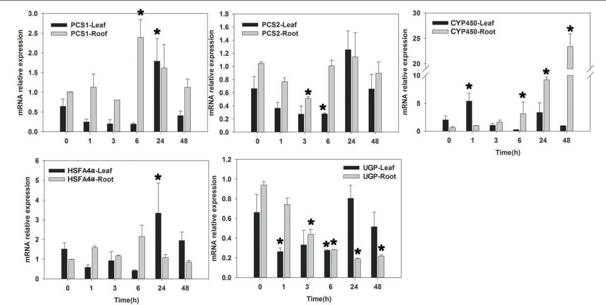 FIGURE 6 | qRT-PCR analysis of five Cd-tolerant candidate genes in roots and leaves of seashore paspalum under Cd stress at 0, 1, 3, 6, 24, and 48h. *Represent significant difference (p < 0.05) under cadmium stress comparing to CK (0 h).
