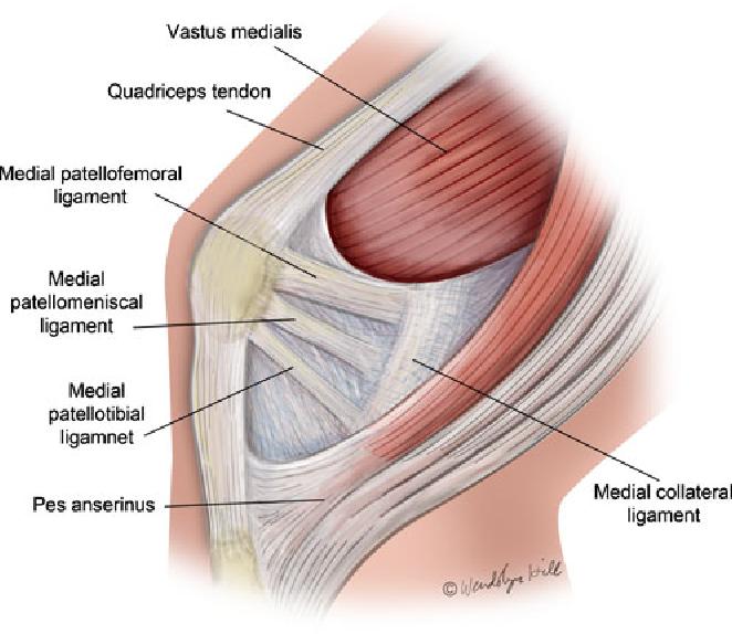 Structure Of Medial Patellar Retinaculum Semantic Scholar