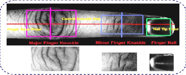 Figure 3 for FDFNet : A Secure Cancelable Deep Finger Dorsal Template Generation Network Secured via. Bio-Hashing