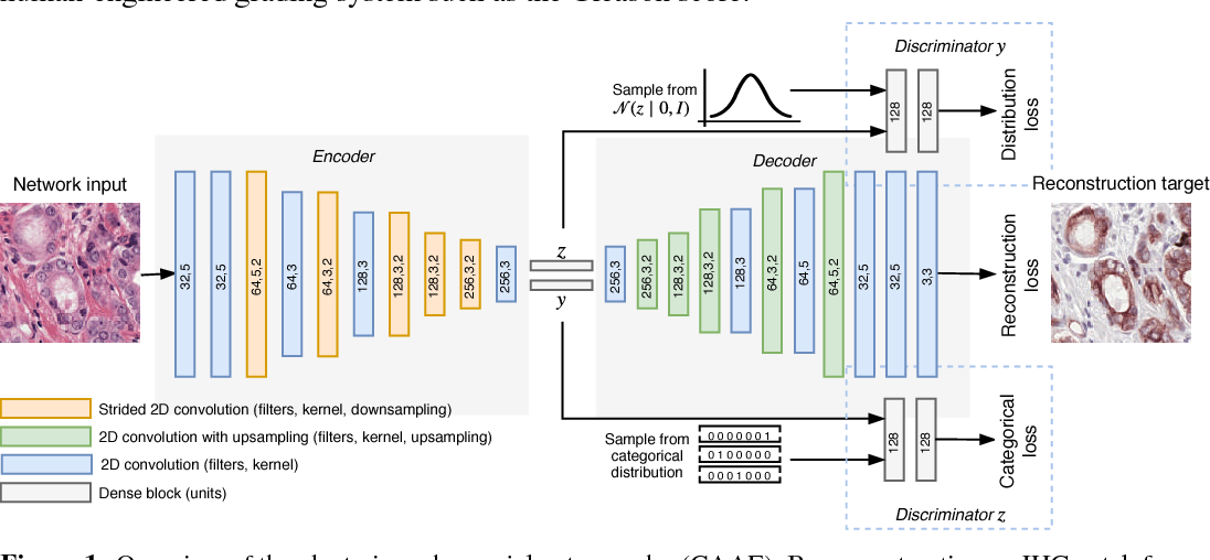 Figure 1 for Unsupervised Prostate Cancer Detection on H&E using Convolutional Adversarial Autoencoders