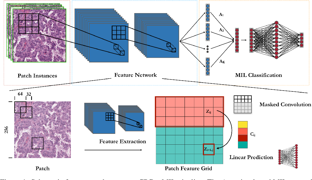 Figure 1 for Semi-Supervised Histology Classification using Deep Multiple Instance Learning and Contrastive Predictive Coding