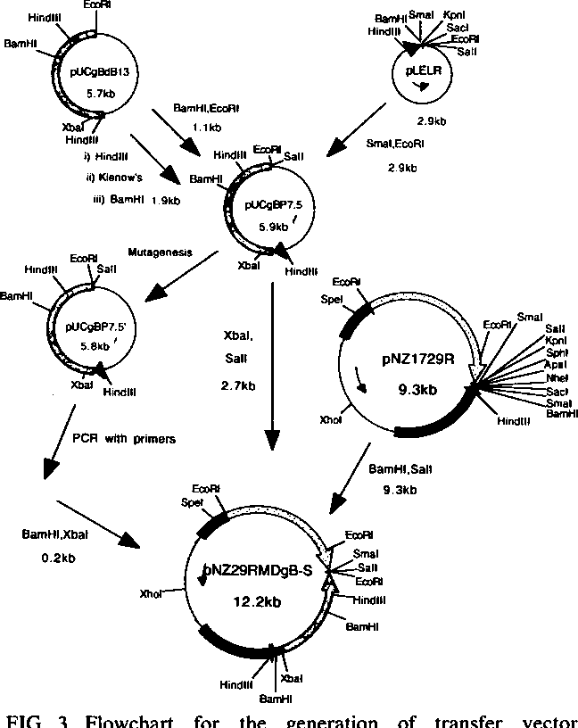 Recombinant Fowlpox Viruses Expressing The Glycoprotein B Homolog