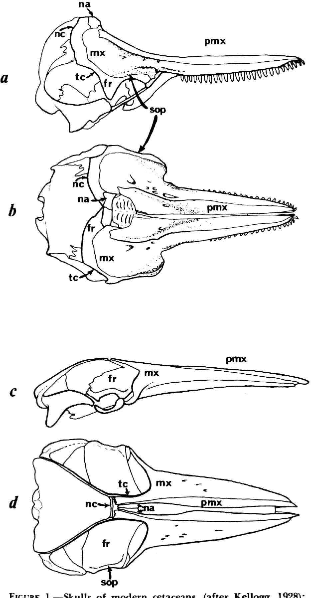 Figure 1 From Anatomy Of The External Nasal Passages And Facial
