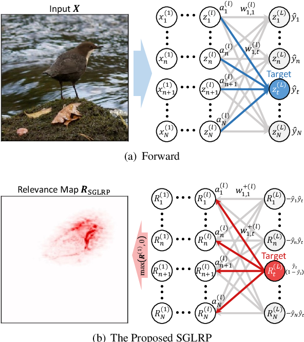 Figure 1 for Explaining Convolutional Neural Networks using Softmax Gradient Layer-wise Relevance Propagation