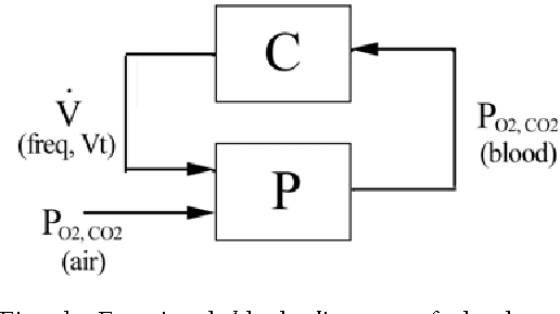 Fig. 1. Functional block diagram of the human respiratory system with controller C and plant P.