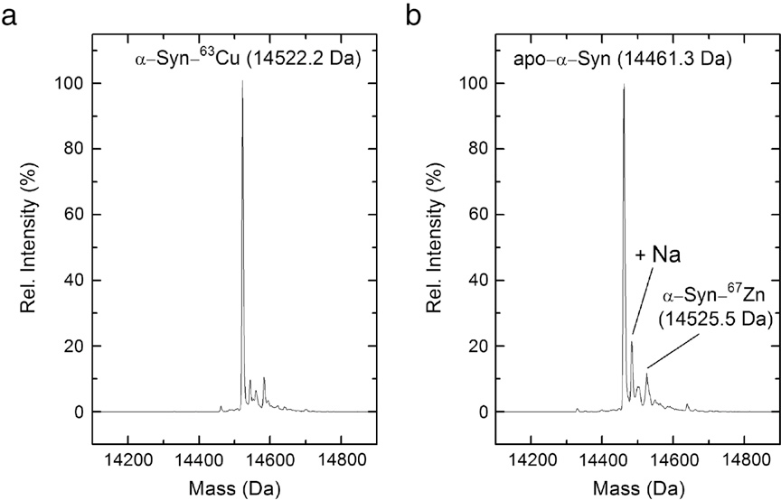 Fig. 4. ESI-Q-TOFMS ofα-Syn–Cu(II) upon the reaction with Zn7MT-3. (a) Deconvoluted ESI diluted into 50% 10 mM ammonium acetate, 50% methanol (or 50% acetonitrile), pH 7.5, an