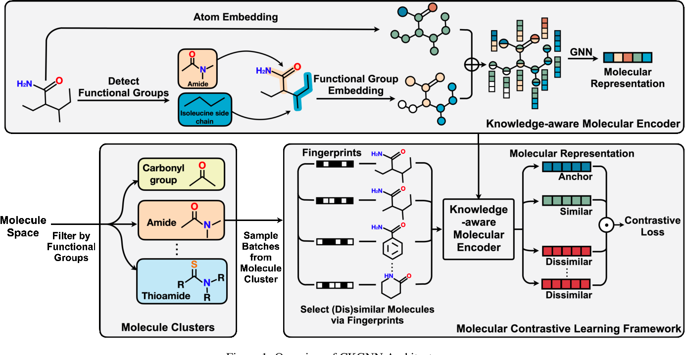 Figure 2 for Knowledge-aware Contrastive Molecular Graph Learning