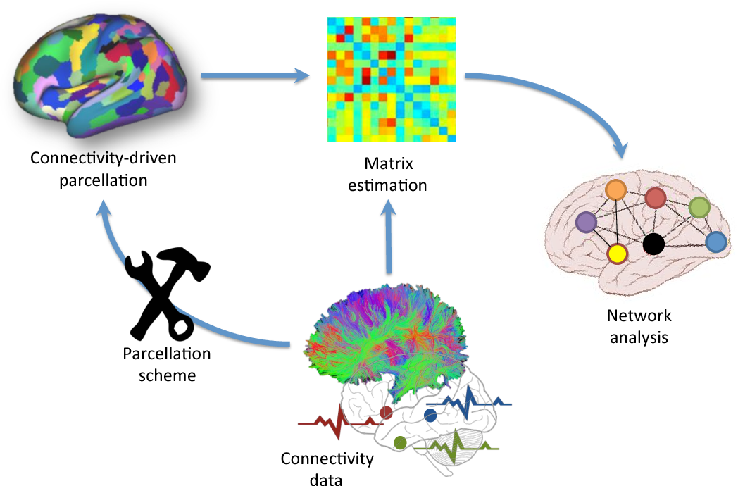 Figure 1 for Connectivity-Driven Parcellation Methods for the Human Cerebral Cortex