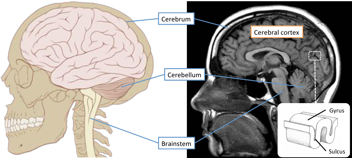 Figure 3 for Connectivity-Driven Parcellation Methods for the Human Cerebral Cortex
