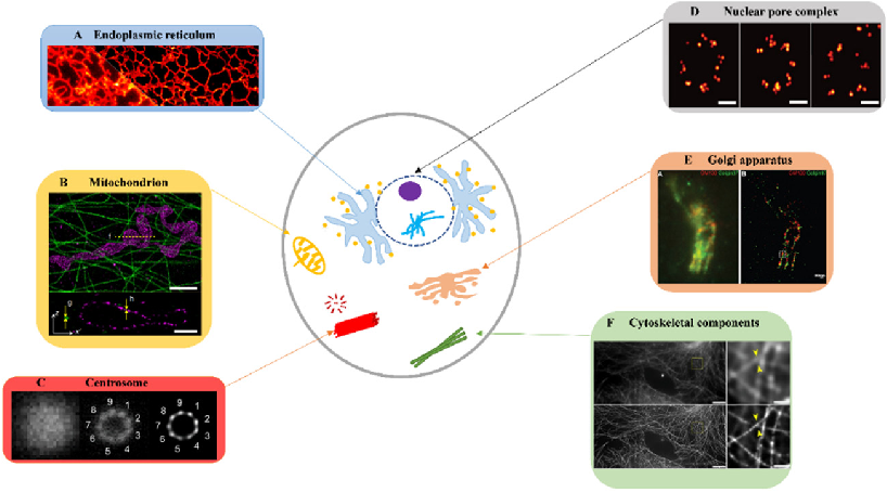 Figure 2 for Advancing biological super-resolution microscopy through deep learning: a brief review