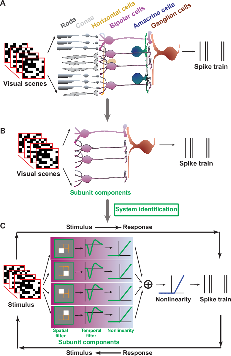 Figure 1 for Neural System Identification with Spike-triggered Non-negative Matrix Factorization