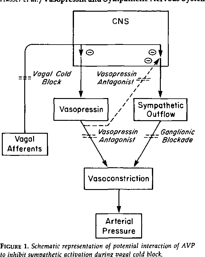 The role of vasopressin and the sympathetic nervous system in the figure 1 ccuart Choice Image