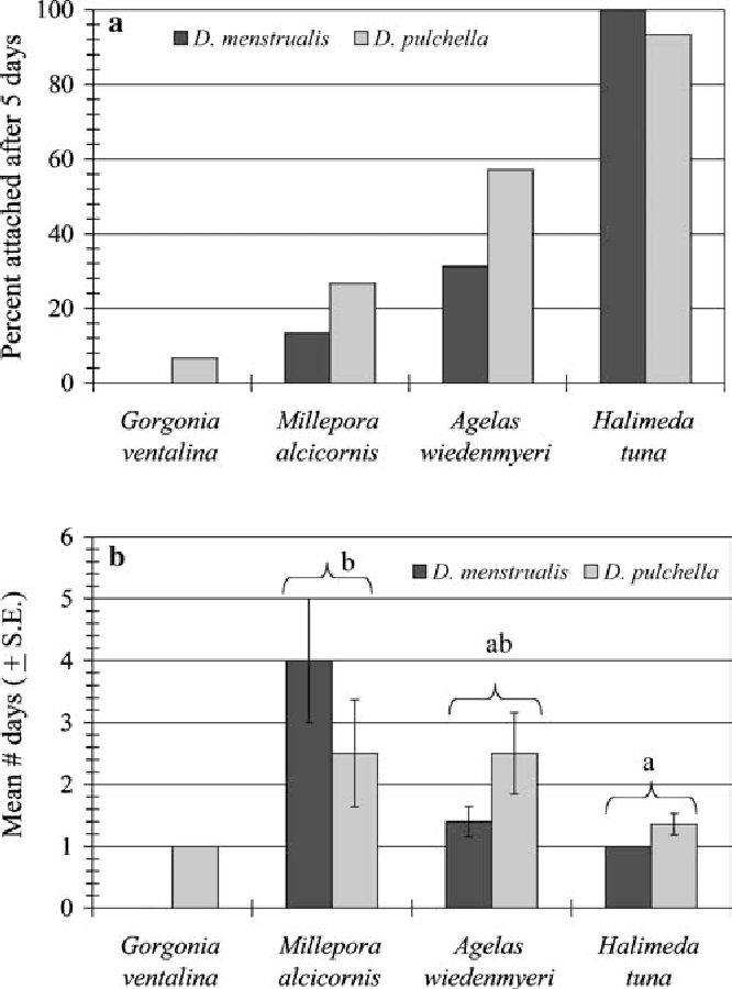 Fig. 4 a Attachment success of four-dichotomy fragments Dictyota menstrualis and Dictyota pulchella (n=15 each) to benthic hosts at the 21 m site, and bmean days to attachment to the host (±SE) for each species in August 2000. Kruskal–Wallis (p=0.002) and a posteriori Mann–Whitney U comparisons (a=0.05) were used to determine significant differences in attachment rates of Dictyota spp. on each host (denoted by different letters in chart). Gorgonia ventalina was not used in the statistical analysis due to small sample size (n=1)