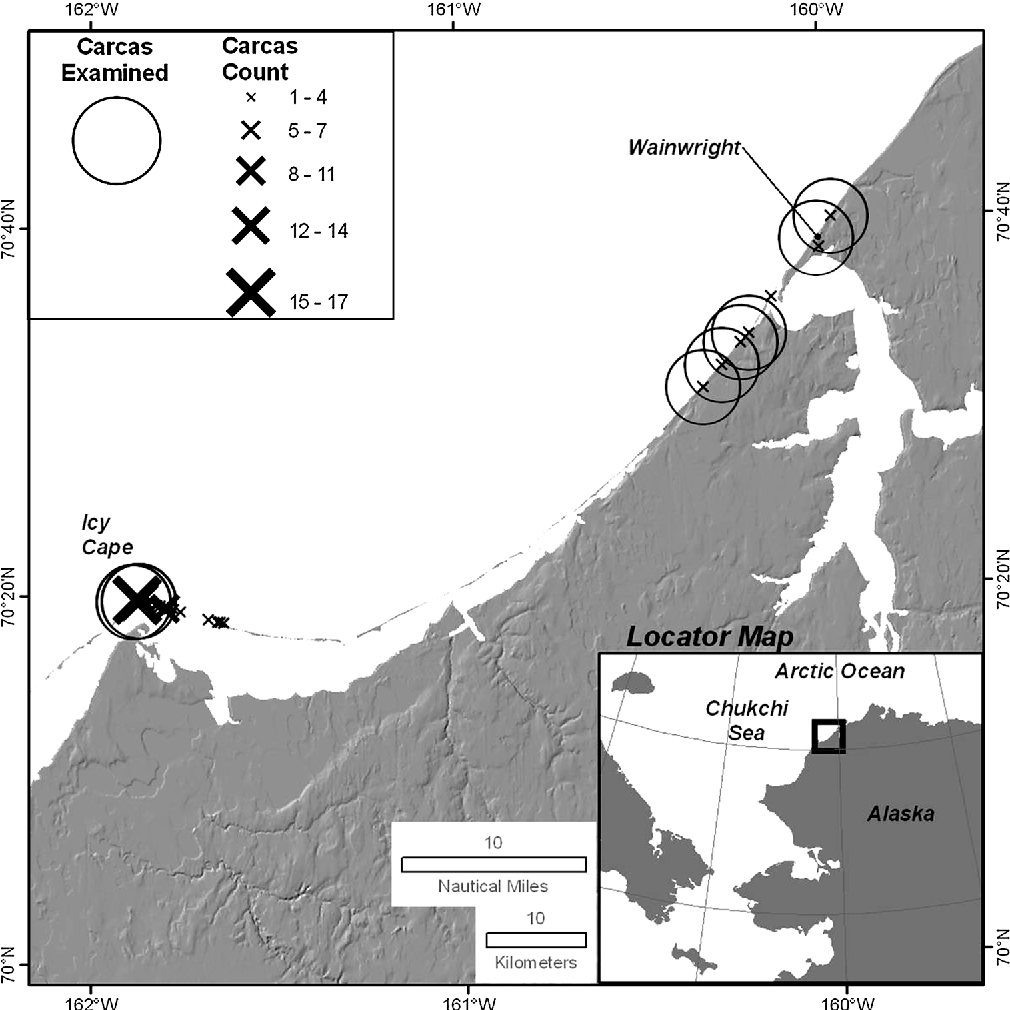 Figure 3 From Demography And Pathology Of A Pacific Walrus Odobenus