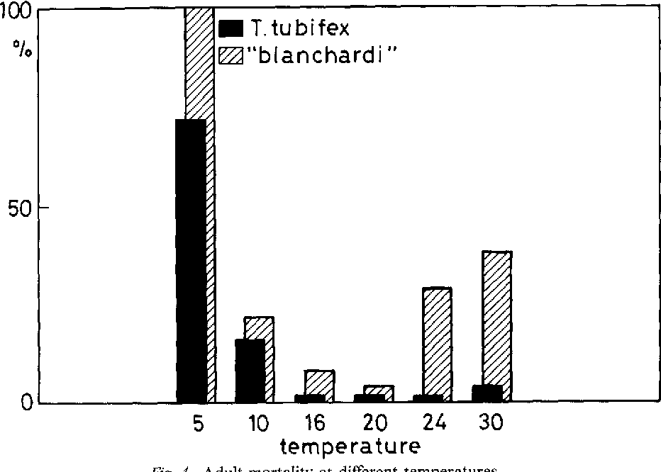 Figure 4 from Cohort cultures of Tubifex tubifex forms
