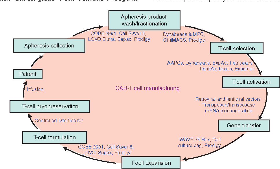 Figure 1 From Clinical Manufacturing Of Car T Cells Foundation Of A