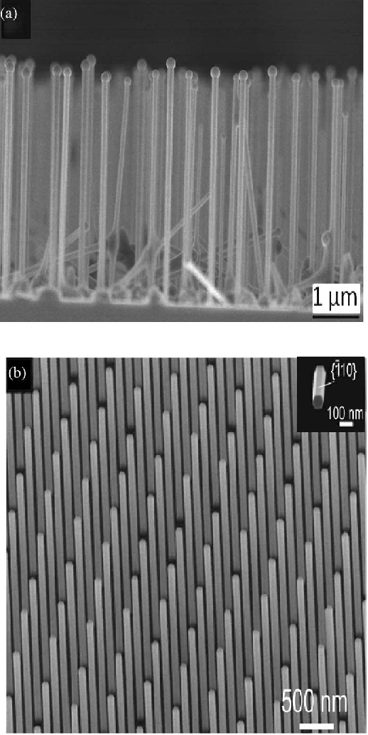 Fig. 3. Scanning electron micrographs of GaAs nanowires obtained by (a) gallium-assisted method and (b) SAE taken from [38].