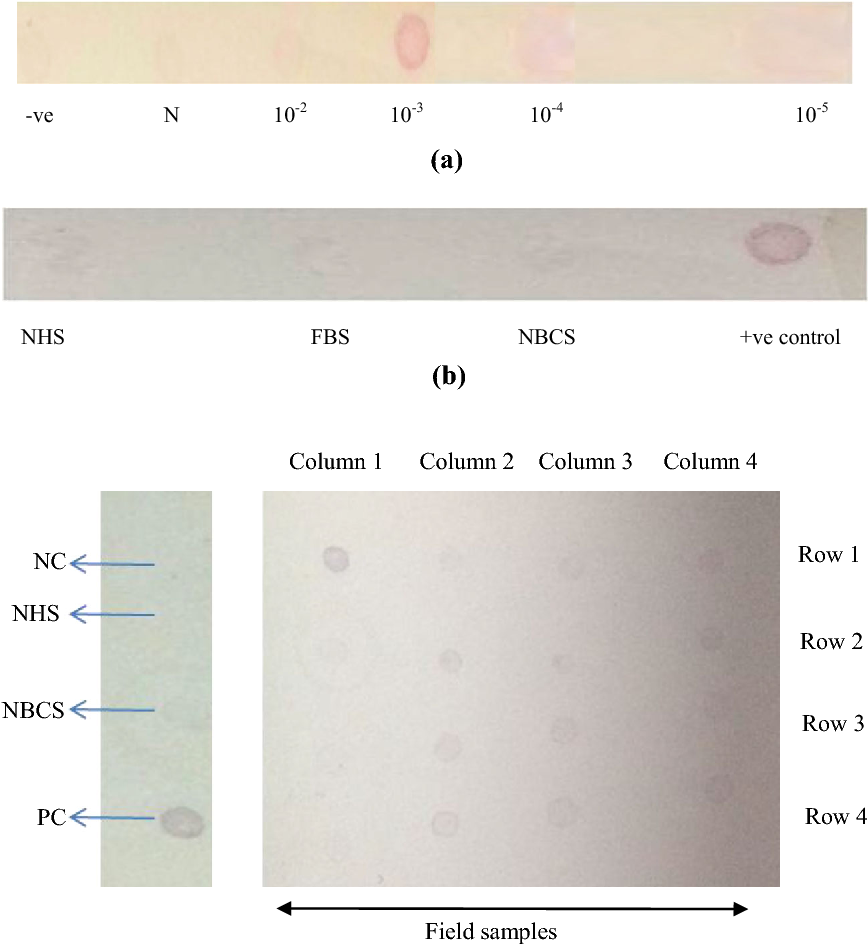 Fig. 4 Immuno dot-blot assay showing ten fold dilution of antibody. N neat serum (a) GNP dot-blot assay showing -ve result with NHS, FBS, NBCS and ?ve control (b)