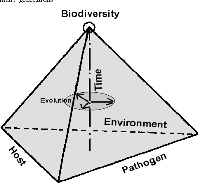 Fig. 1. A disease pyramid showing axes relevant to forest pathosystems (modified from Agrios 1988). The pyramid is a portrayal of the range of disease outcomes within six