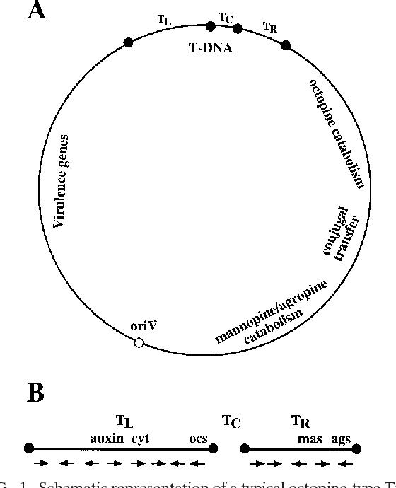 Gelvin Gene Jockeying Tool Transformation The Biology