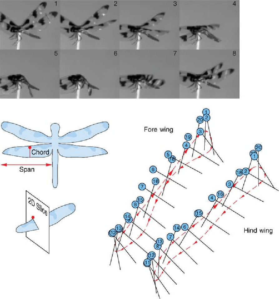 PDF] DISSECTING INSECT FLIGHT - Semantic Scholar