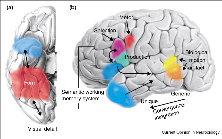 Figure 2 from Semantic memory and the brain: structure and ...