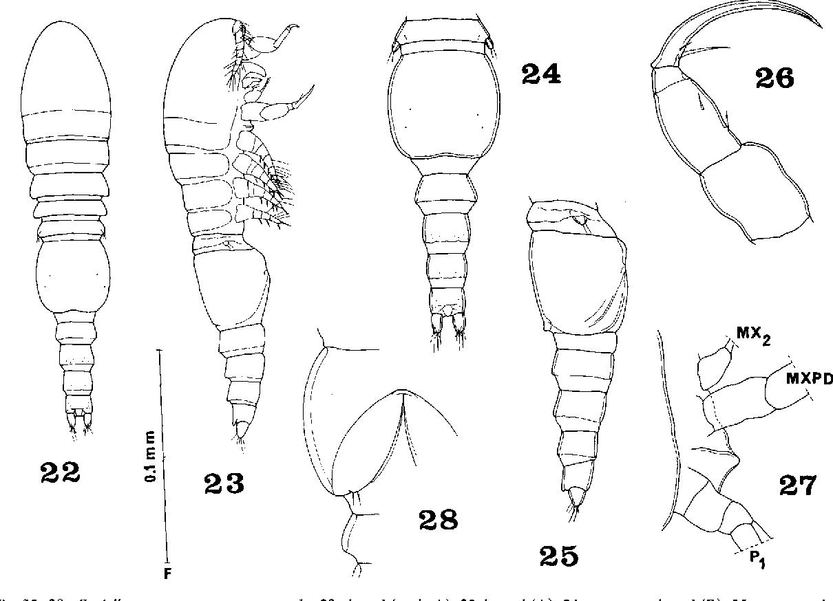 figure 22-28