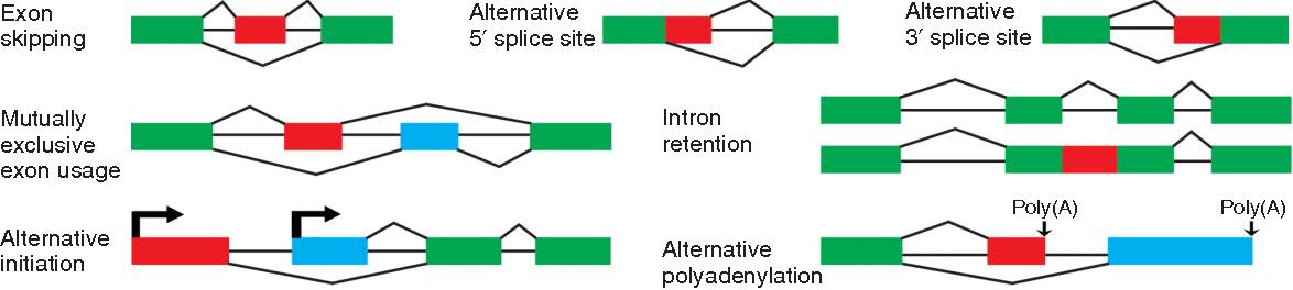 FIGURE 1 | Basic types of alternative splicing and transcript isoform variation.