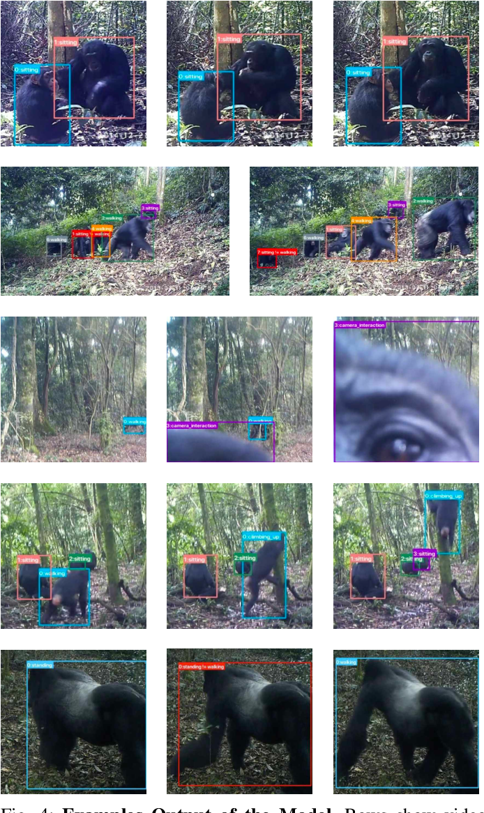 Figure 4 for Visual Recognition of Great Ape Behaviours in the Wild