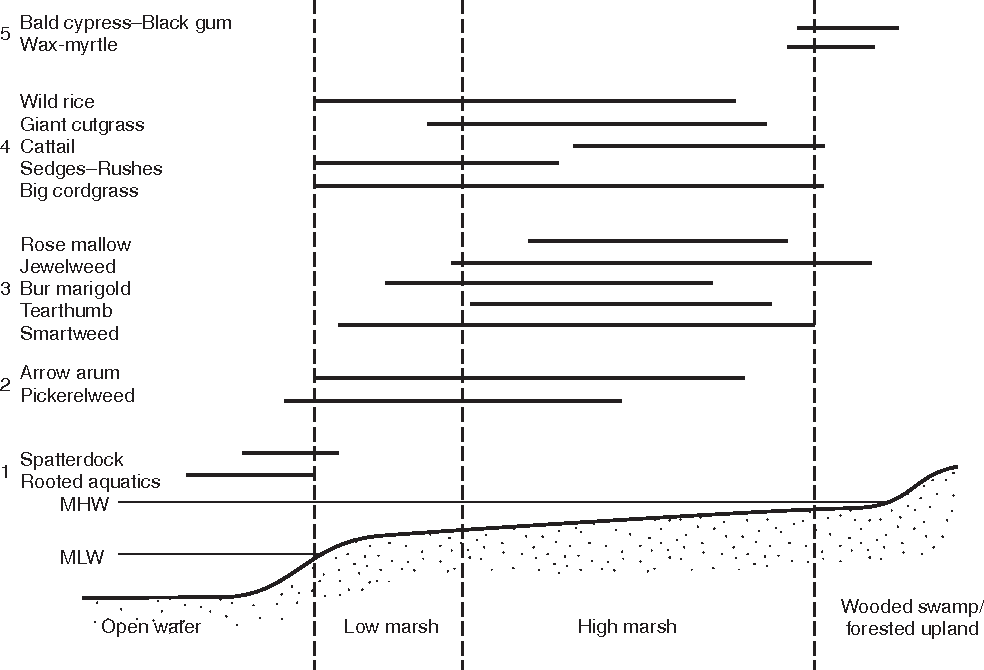 figure 3 cross section of a typical tidal freshwater wetland showing major  habitats and distributions of