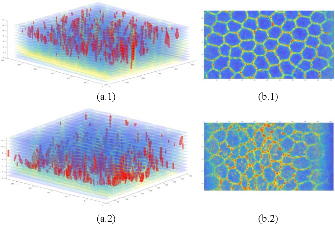 Figure 3 for Multi-Object Portion Tracking in 4D Fluorescence Microscopy Imagery with Deep Feature Maps