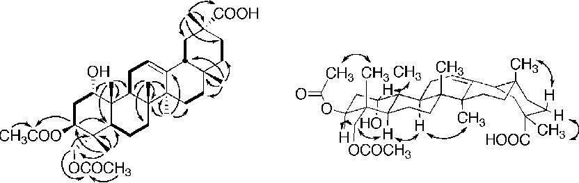 Cytotoxic pentacyclic triterpenoids from combretum sundaicum and figure 1 ccuart Images