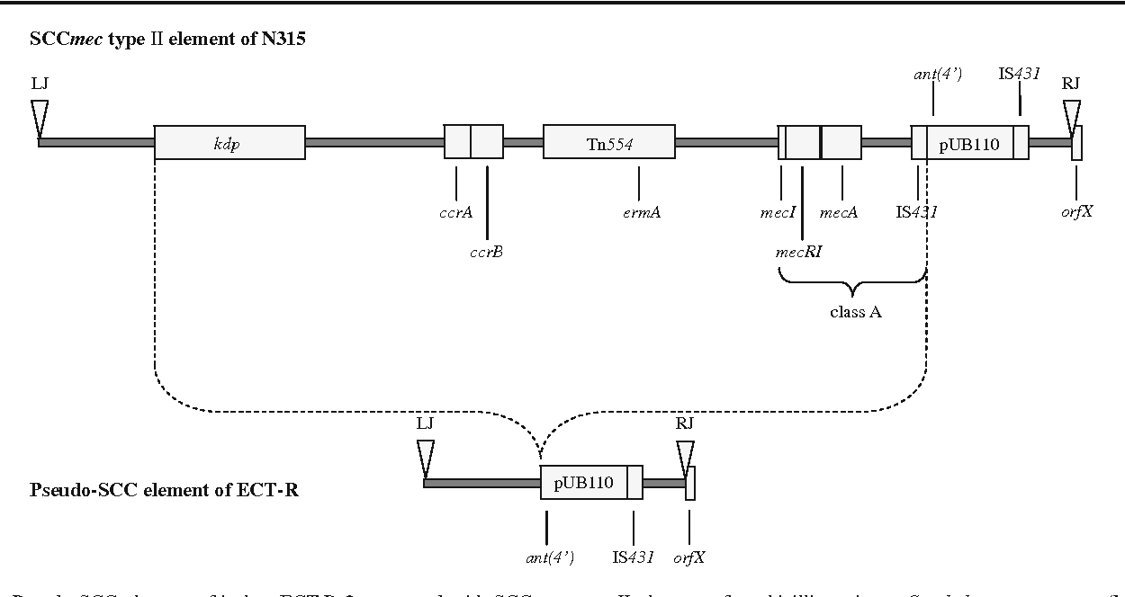 Fig. 1 Pseudo-SCC element of isolate ECT-R 2 compared with SCCmec type ΙΙ element of methicillin-resistant Staphylococcus aureus (MRSA) strain N315